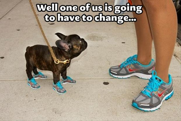 dog-in-running-shoes1